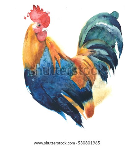 Rooster cockerel colorful bird watercolor painting illustration isolated on white background
