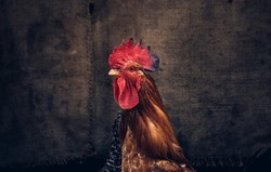 Rooster on the background of linen. Rural concept. Hens and rooster.