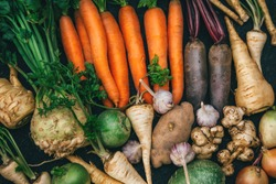 Root crops, carrots, parsley root, turnip, onion, garlic, Jerusalem artichoke, horseradish. Root crops background. Food background