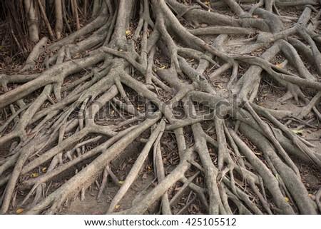 root of tree #425105512