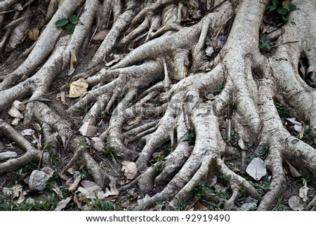 root of tree, created by nature