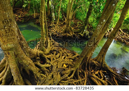 Root of water plant