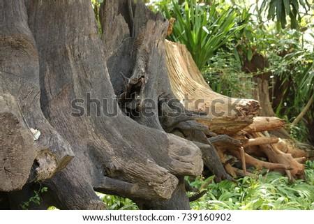 root stump #739160902