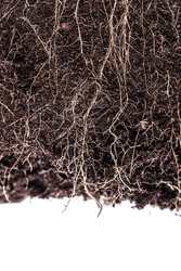 Roots in soil isolated on white background