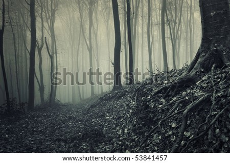 roots of a tree from a misty forest