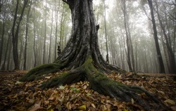 roots of a tree in a foggy forest