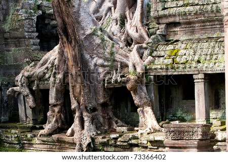 Roots of sycamore trees growing into ruins Temple of Ta Prohm built by Jayavarman VII