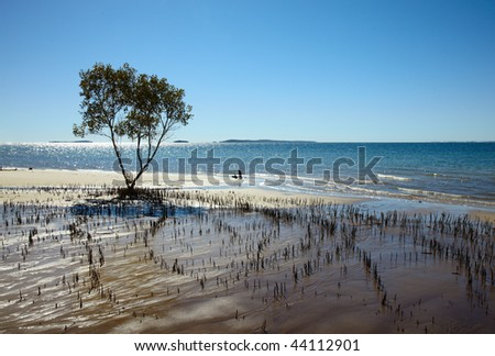 Roots of the mangrove tree at ocean coast