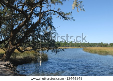 Rope swing hanging from live oak tree over southern tidal river.