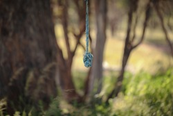 Rope with knot hanging from tree in natural bush setting. Outdoor nature activities.