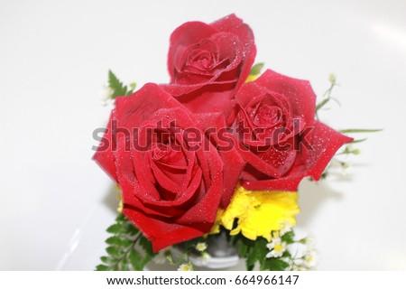 Rose #664966147
