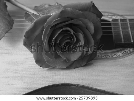 rose and guitar