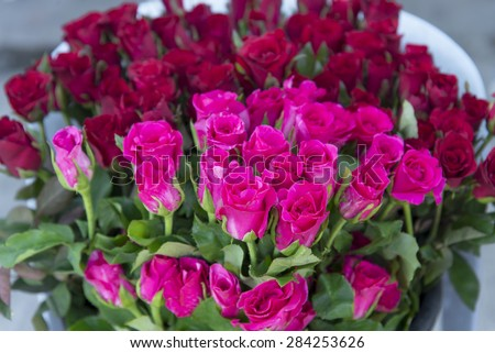 rose and red rose in bucket at flower shop