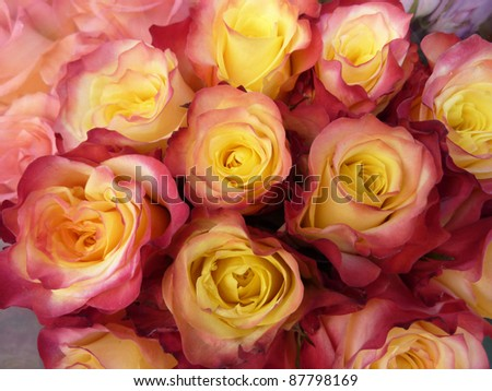 Rose and yellow roses
