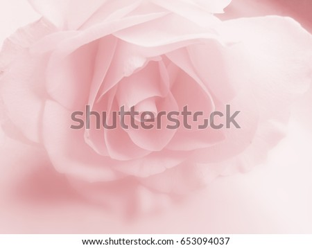 Rose background soft pink
