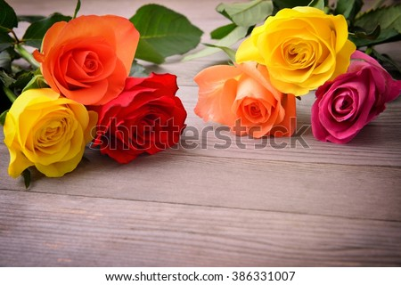 Rose, Bunch of roses. Bouquet of roses. Rose flower. Roses on wood background.  Beautiful roses, roses represent for love.