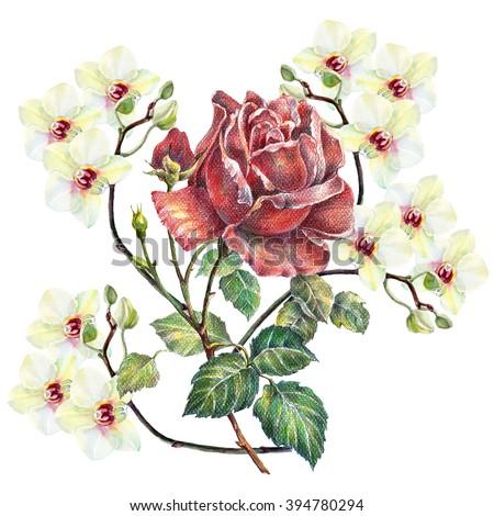 Rose color pencil, white orchid watercolor