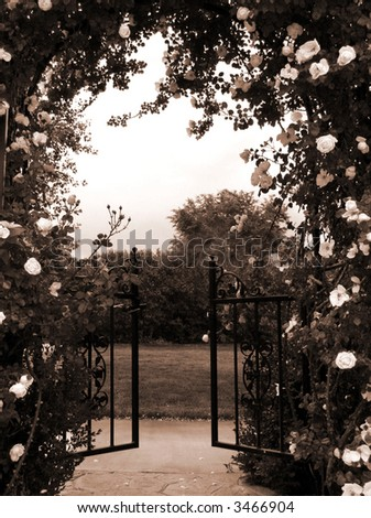 rose covered arbor leading through yard with concrete walkway - sepia tone