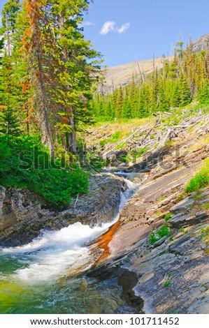 Rose Creek in Glacier National Park in Montana