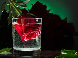Rose flower in a glass of water. Flowers on a blue background