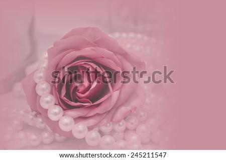 rose flower in pink color for background