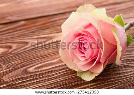 rose flower on wood background