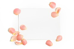 Rose flower petals on empty piece of paper isolated on white. Copy space for text. Feminine concept. Mock up top view
