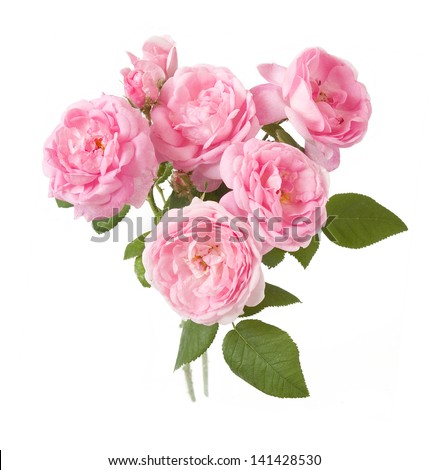 Rose Flowers Bunch Isolated On White Background Stock ...