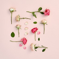 Rose flowers on pastel pink background. Spring or summer floral creative layout with white and red flowers. Wedding, mother or valentine day floral concept