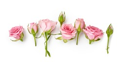 Rose flowers on white background. Top view of pink roses and rose buds.