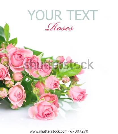 Rose flowers over white