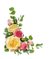 Rose flowers with eucalyptus leaves in a corner arrangement isolated on white background. Flat lay. Top view.