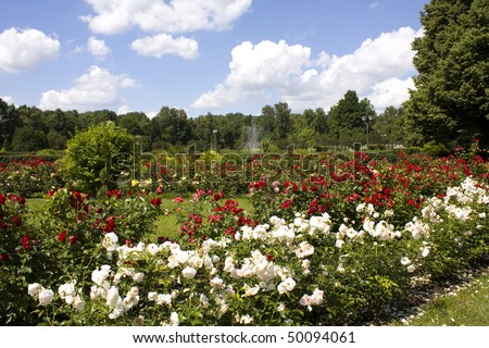 Rose garden. Recorded in Rosarium in Sokolniki park in Moscow.