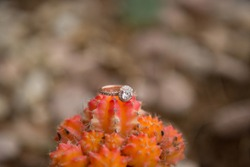 Rose Gold Diamond Engagement Ring on a cactus