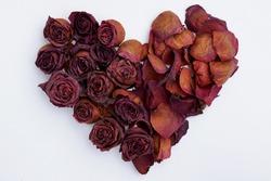 Rose Heart Faded Petal Blossom Valentine Aging