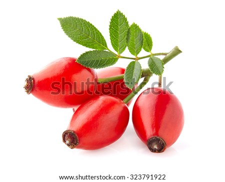Rose hip with leaves Stock photo ©