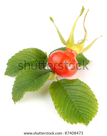 Rose Hip with Leaves Isolated on White Background