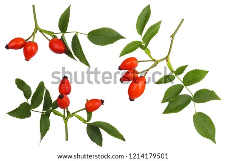 Rose hips isolated on white, top view. Stock photo ©