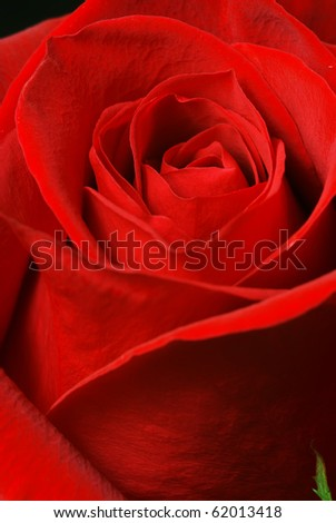 Rose inside. Nature composition. Element of design.