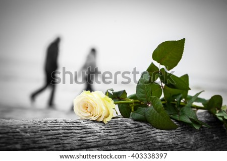 Rose lying on broken tree on the beach. A couple walking in the background. Concept of romantic love, romance, but may also symbolize a loss, melancholy etc.  Color against black and white