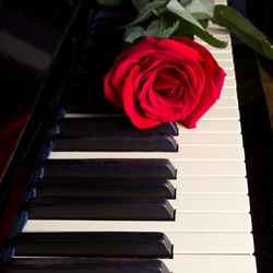 rose on a piano