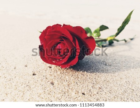 Rose on sand in Saengchan Beach of Thailand.