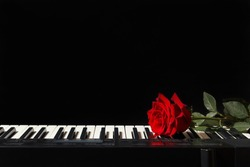 Rose on the keys of the electronic synthesizer on a black background
