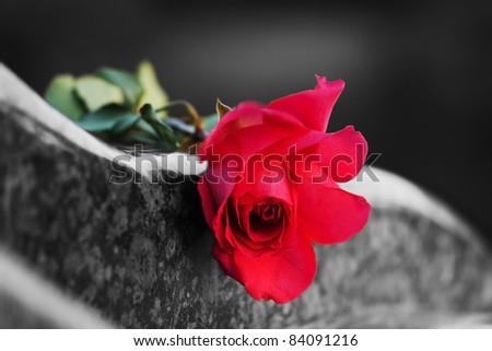 Rose on the tombstone - stock photo