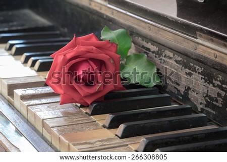 rose on vintage antique wood...