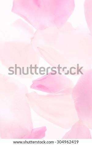 Rose, petal