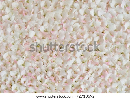 Rose petal background. For the background text