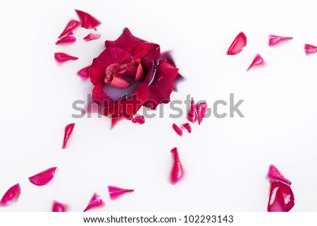 rose-petals and rose in a bath with milk