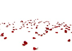 Rose petals are scattered on the floor. Isolated white background
