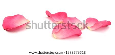 Rose Petals Background #1299676318